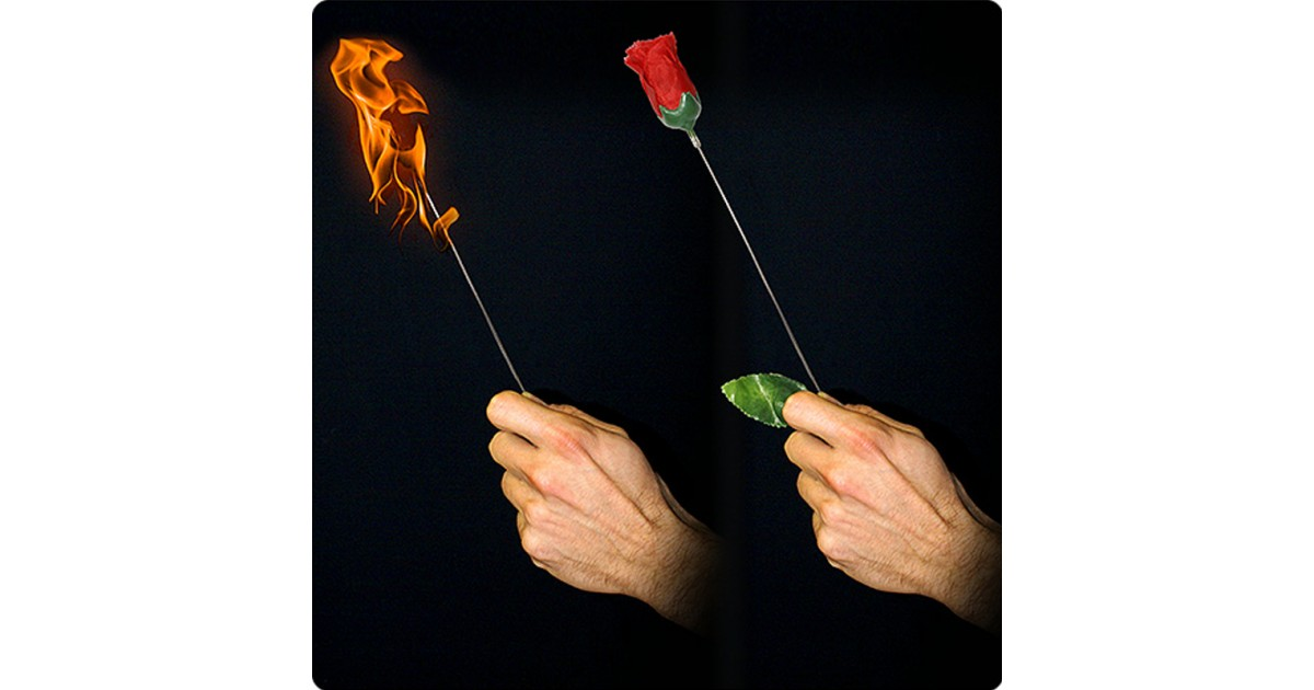 Antorcha a Rosa Plus