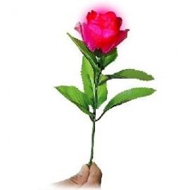 Luz en la Rosa